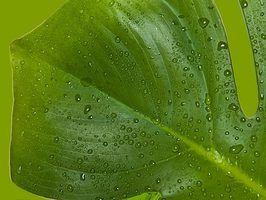 Almofadas de aquecimento para plantas