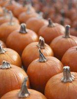Herbicidas seguros para as culturas de abóbora