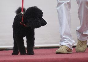 Home remédios para remover cão urina de carpetes