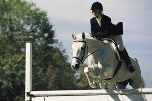 Jogos equitação para jogar online