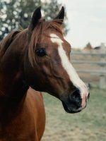 Cavalos usa no império romano