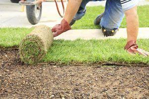 Quanto tempo eu posso manter a grama enrolado antes de eu coloco sod?