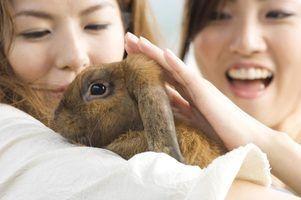 Quanto tempo demora um coelho doméstico viver?