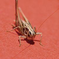 Como equilibrar a fazer o breakdance cricket