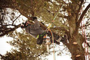 Como se tornar um arborist