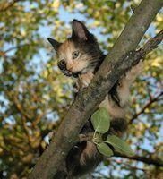 Como construir uma árvore do gato com uma árvore real