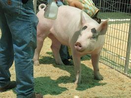 Como construir uma rampa de porco