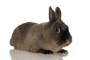 Como construir uma rega automática caseiro para coelhos
