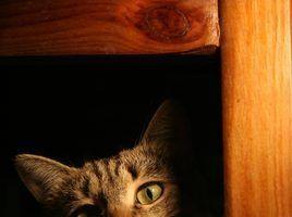 Como construir gato mobiliário de graça