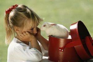 Os coelhos bebés merecem cuidado, especialmente coelhos com lesões.