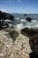 Como coletar conchas do havaí praias