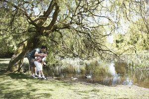 Atrair patos a sua lagoa, criando um habitat ideal.
