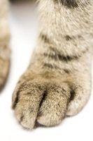 Como cortar as unhas de um gatinho