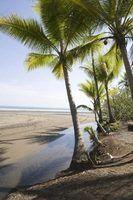 Hollister utiliza imagens relacionadas com a Califórnia como palmeiras para criar atmosfera.