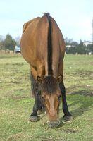 Como terra de diatomáceas para alimentar cavalos