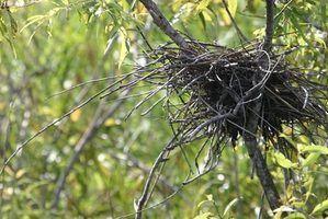 Como encontrar ninhos de aves