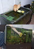 Como se livrar de algas em um aquário de água salgada