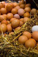 Como ferver ovos duros para que eles são fáceis de descascar