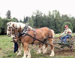 Como ligar uma parelha de cavalos