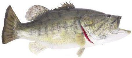 Como manter baixo em tanques de peixes