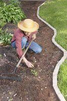 Mão semana controles capina doca em jardins e gramados.