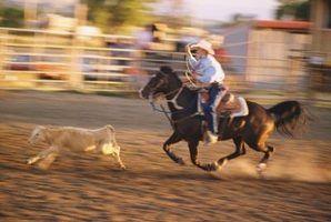 Como fazer uma barreira roping da vitela
