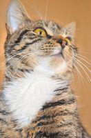 Como fazer um arranhador do gato com tecido de sisal