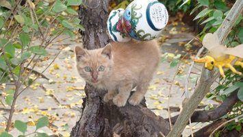 Como fazer um gato árvore com galhos de árvores naturais