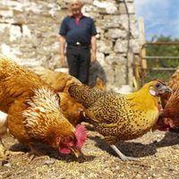 Como fazer um alimentador de frango do pvc