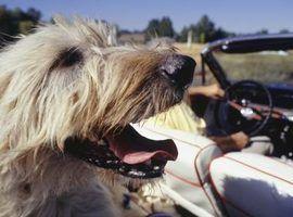 Como fazer uma rede cão para o banco de trás de um veículo