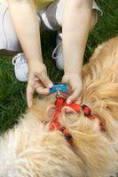 Como fazer um arnês de cão caseiro