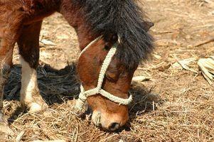Como fazer um alimentador de feno Cavalo