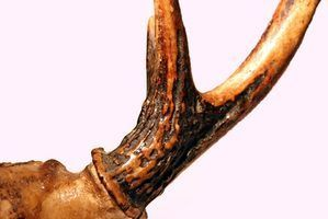 Como fazer um cabo da faca de ossos de veado