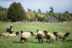 Como fazer um alimentador de ovelhas