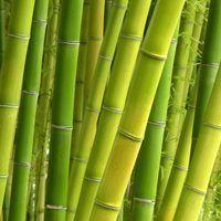 Como fazer cestas de bambu