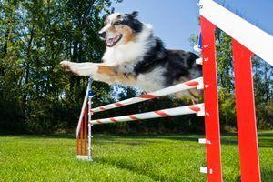Como fazer com que o equipamento da agilidade do cão para fora do tubo de pvc