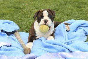 Como fazer cão cobertores