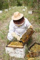 Como fazer fondant para as abelhas
