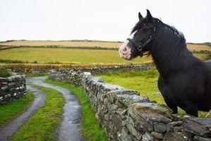 Como fazer shampoo cavalo
