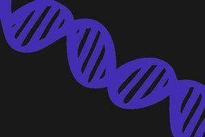 Como fazer iniciadores oligonucleotídicos para pcr