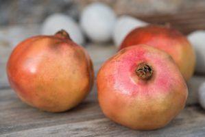 Como fazer óleo pomegrante