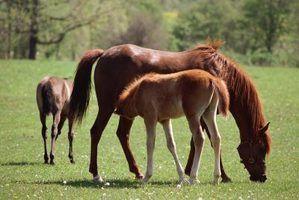 Como plantar capim-friendly cavalo