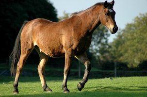 Como jogar corridas de cavalos