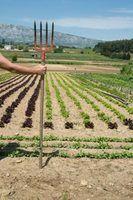 Cultivar o solo manualmente com uma pá de jardim, se você quiser um jardim deslumbrante.