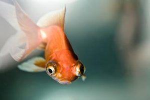 Como remover nitratos de um aquário
