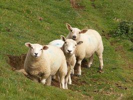 Como vender lã crua