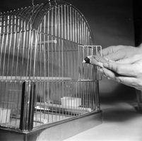 Como domar um passarinho