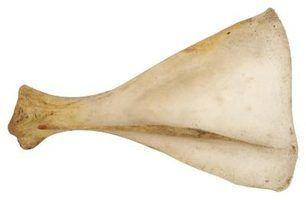 A gelatina é derivada de carne, frango ou peixe ossos.
