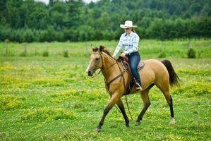Como treinar um cavalo para ser um marcapasso