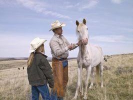 Como transportar um cavalo a partir dos eua para o canadá